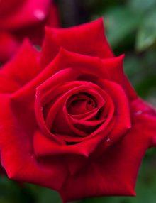 redberlin