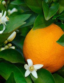 portocal anul 2
