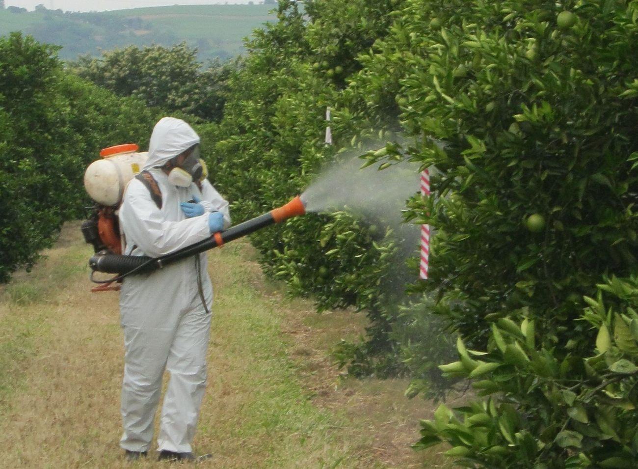 Ghid Stropiri pomi fructiferi Semintoase mar par gutui