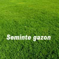 Gazon - Seminte Gazon  Soare 5kg