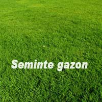 Gazon - Seminte Gazon Standard 5KG
