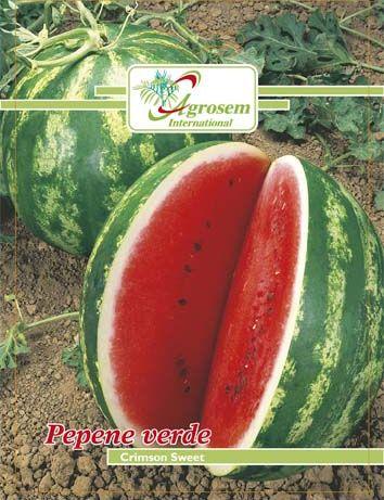 Seminte legume - Pepene Verde Crimson Sweet