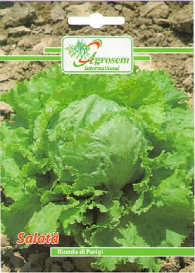 Seminte legume - Salata Bionda Di Parigi