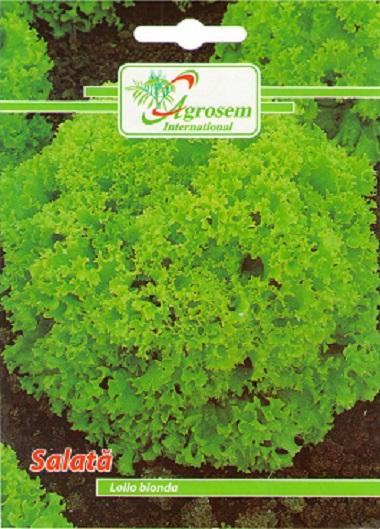 Soi de salata cu frunze de culoare verde deschis