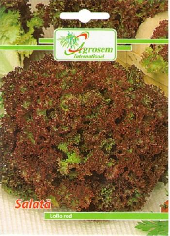 Seminte legume - Salata Lollo Red