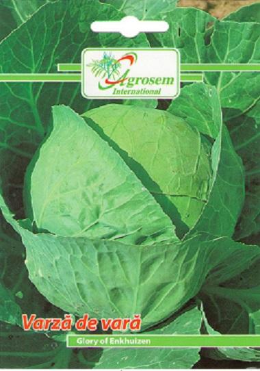 Seminte legume - Varza Vara Glory Of Enkhuizen